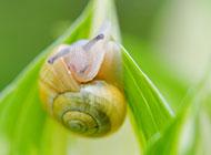 可爱的蜗牛图片高清特写