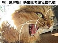 qq爆笑猫咪图片