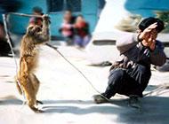 动物爆笑图片之猴耍人戏