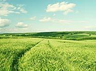 绿色草地风光唯美意境图片