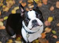 卖萌狗狗图片高清动物特写