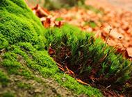 绿色清新植被精美风景图片