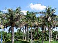 公园的棕榈树图片高清