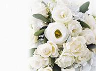 白色鲜花背景图片素材