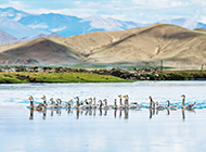 冬日湖畔中的小鸭子高清动物壁纸