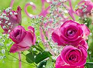 美丽绚烂的玫瑰花图片