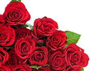 情人节玫瑰花束娇艳欲滴