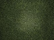一片绿草地背景图片