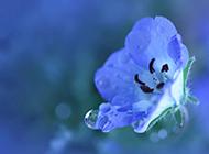 紫色小花朵春日晨光中绽放浪漫风景壁纸