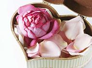 心形盒子里的美丽玫瑰花瓣