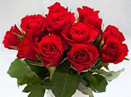 白色花瓶中的红玫瑰和心形巧克力图片
