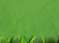 绿草模糊护眼绿色背景图