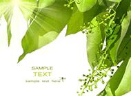 绿野素雅清新高清图片素材