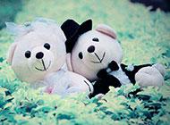 可爱小熊布娃娃精致背景图片