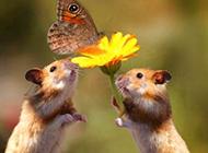 小老鼠萌萌可爱图片大全