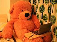 泰迪熊的萌图 大熊的一天