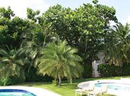 小棕榈树图片生机勃勃