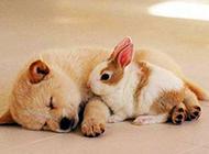 萌狗狗图片精美动物头像