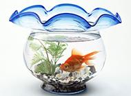 鱼缸唯美个性背景图赏析