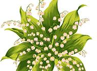 清新的铃兰花手绘图片素材