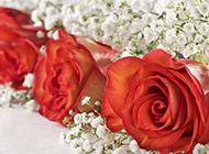 亭亭玉立的玫瑰花束素材