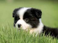 萌系狗狗图片可爱动物素材