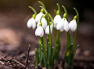漂亮的白色花朵唯美背景图片