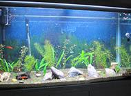 鱼缸背景图片大全黑色背景素材