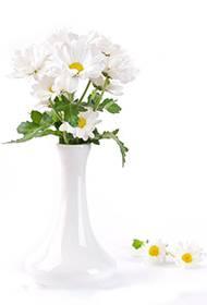 纯洁高尚的菊花插花图片