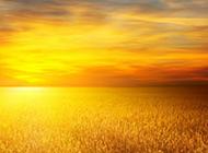 金色云彩高清唯美背景图片