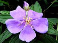 紫色花清新背景图片大全