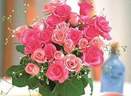 粉色玫瑰花图片素材精选