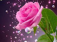 唯美玫瑰花背景创意独特