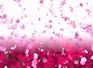 唯美梦幻的粉色花瓣ppt背景图片