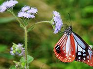 蝴蝶唯美意境高清养眼壁纸