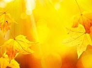 黄色光斑落叶背景素材