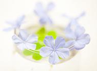 精选唯美小清新花朵壁纸