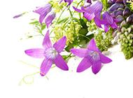 淡紫色鲜花背景素材