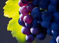 诱人葡萄满挂枝头可口水果图片