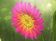 向日葵花彩绘插画图片素材