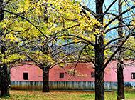 秋天的树木植物摄影图片