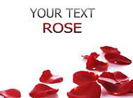 散落的红玫瑰花瓣背景素材