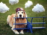 萌狗狗温馨的可爱宠物图片素材