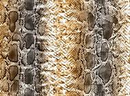 蛇皮纹理qq个性背景图片