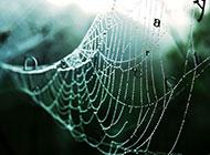 蜘蛛网上的水珠精美背景素材