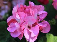 漂亮的紫色鲜花摄影图片