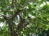 枝叶茂密的大树摄影图片