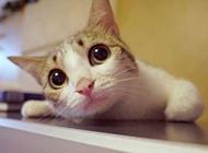 小猫咪萌图温馨宠物图片素材