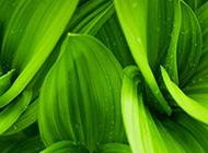 绿叶植物下雨天清新背景图片