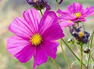 植物花卉精美壁纸高清图片